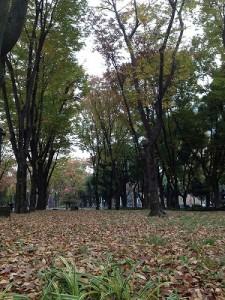 leaf_leaf